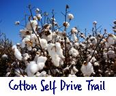 Cotton self drive trail