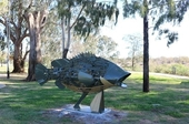 Murray cod sculpture
