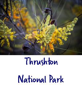 thrushton national park